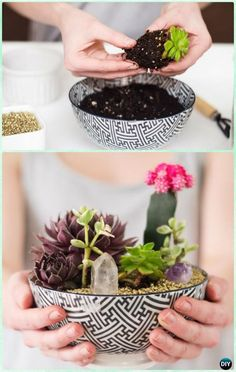 diy bowl succulent garden instruction diy indoor succulent garden ideas projects