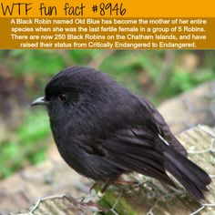If you're looking for the most interesting list of amazing animal facts, you're at the right place! Here are compilation of the best fun and random facts about animals! Wtf Fun Facts, Funny Facts, Crazy Facts, Random Facts, Crazy Animal Facts, Trivia Facts, Strange Facts, Animals For Kids, Animals And Pets