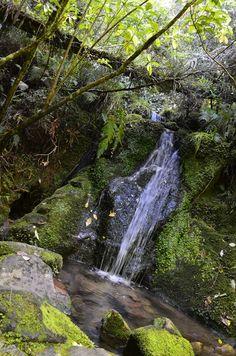 Able Tasman, New Zealand | http://www.gettingstamped.com
