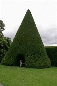 Yew cone arbour at Antony, Cornwall, now that is a tee pee - Top 10 topiaries: best decorative hedges www.telegraph.co....