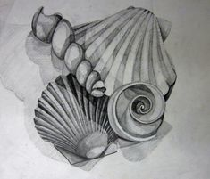 shell art lessons - Google Search