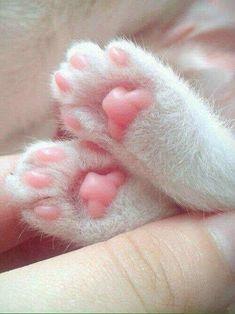 Kitty feets!