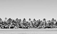 Playa palmeras República Dominicana de    Wallpic