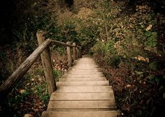 Woodland photograph - Elven Pathway - rustic autumn fine art photograph of woods and wooden stairs - 5x7 print. $15.00, via Etsy.