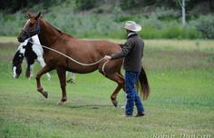 Be at Liberty: Learn How to Play with Your Horse on the Ground