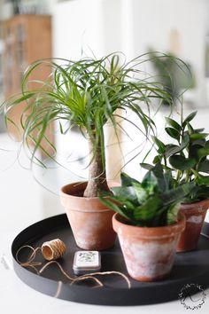 KUKKALA #viherkasvit #indoorplants