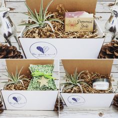 It's the season of giving and we have Holiday Mini Gift Boxes! Peppermint Sticks, Holiday Candles, Gift Boxes, Giving, Small Gifts, Sprouts, Personalized Gifts, Lavender, Gift Wrapping