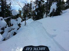 Great winter