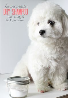 Loving My Pet: DIY Dry Shampoo for Dogs