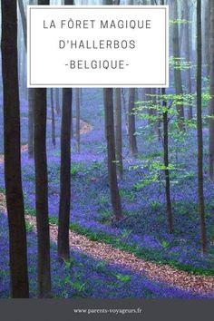 foret magique d'hallerbos Belgique #voyage #foret #nature Hawaii Travel, Asia Travel, Solo Travel, Bruges, Lightning Photos, Magic Forest, Voyage Europe, Europe Destinations, Life Is An Adventure