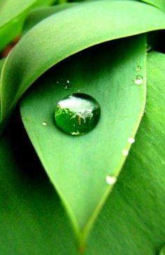 Perle de pluie... -  - Photo macro de gouttes d'eau