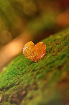 """""""Yellow Heart"""" by Taras Bychko Heart In Nature, Golden Leaves, Autumn Leaves, Dew Drops, Autumn Day, Happy Autumn, Green And Orange, Love Heart, Gods Love"""