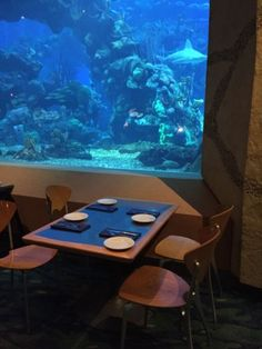 Disney World Dining: Coral Reef Restaurant