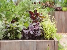 Tips for a Raised-Bed Vegetable Garden | DIY Garden Projects | Vegetable Gardening, Raised Beds, Growing & Planting | DIY