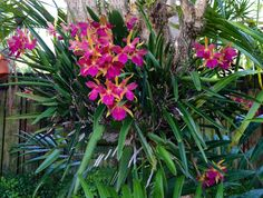 Orchid on tree