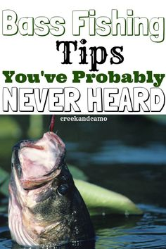 Check out this article to get tips, tricks, hacks, and strategies to catching your biggest bass to date. I'll give you all the secrets so that you will know how to catch a bass fish today! Best Bass Fishing Lures, Bass Fishing Shirts, Trout Fishing Tips, Best Fishing, Kayak Fishing, Fishing Tricks, Fishing Stuff, Carp Fishing, Fishing Tackle