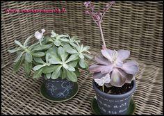 2. Pots de fleurs customisés pour la maîtresse (c) Les cahiers de Lucie-Rose