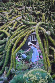 Cactus, John Turck Collage