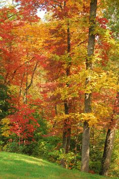 Fall colors in Bryson City and the North Carolina Mountains
