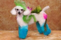 Pet dog is groomed