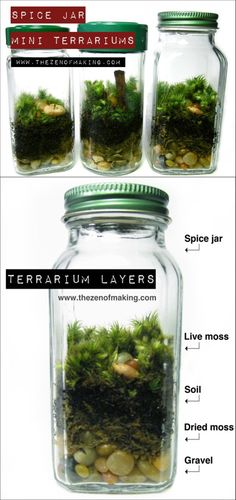 Spice Jar Mini Terrariums