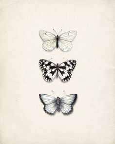 Antique Butterflies Collage - Natural History Art Print No. 1 8x10 on Etsy, $15.00