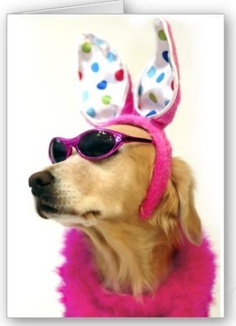Golden Retriever Easter Princess - Fun Easter Greeting Card - Funny, cute Easter card featuring a stylish Golden Retriever wearing polka dot bunny ears, pink boa, and sun glasses! Easter Greeting Cards, Funny Greeting Cards, Easter Card, I Love Dogs, Puppy Love, Dachshund Love, Funny Gifts, Holiday Cards, Cute Animals