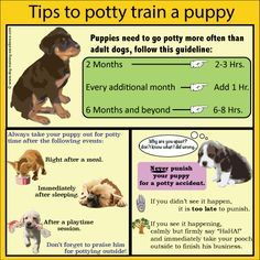 Tips for potty training your puppy dog