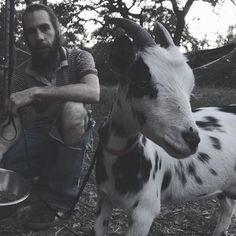 Goats Milk Soap 6 Bar Collection | Old Factory Organic Coconut Oil, Old Factory, Goat Milk Soap, Milk And Honey, Essential Oil Blends, Shea Butter, Goats, Bar