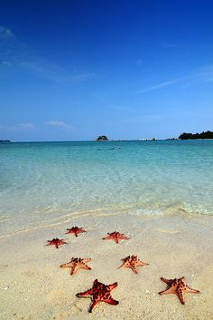 7 Bintang laut di Bangka Belitung by M Reza Faisal on Flickr.