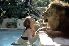 Tippi Hedren in her swimming pool spouting water at Neil the lion (1971)