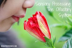 The olfactory system (the sense of smell) is yet another way for our brains to receive information about what is going on around us. Learn more!