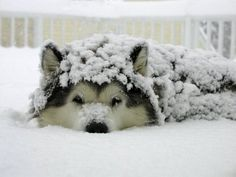 Hilarious and Heartwarming Photos of Dogs in Snow