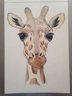 giraffe drawing pencil face drawings ink draw easy animal simple sketches girafe interesting painting crayon