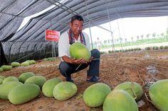 #WatermelonPlant #Gardening #WorldRecord #InterestingNews