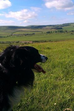 Home Dog Boarding Cramlington