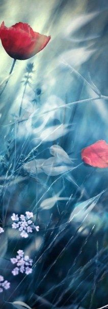 Magical Flower Field. c.