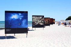 Die Erlebniswelt Fotografie Zingst – eine willkommene Weiterbildung | Fotowände am Strand von Zingst – Fotofestival Horizonte 2015 (c) Frank Koebsch (3)