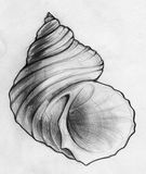Illustration about Hand drawn pencil sketch of a curvy spiral sea shell. Illustration of picture, illustrations, image - 44318008 Art Drawings Sketches, Pencil Drawings, Shell Drawing, Art Du Croquis, Gcse Art Sketchbook, Ouvrages D'art, Sea Art, Nature Drawing, Observational Drawing