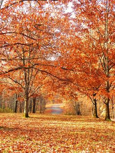 The heart of autumn must have broken here and poured its treasures out upon the leaves (Susan Branch).  Picture from Kentuck Campground - Ohiopyle, PA