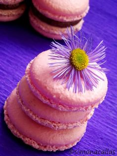 Macarons reteta simpla 5 Macarons, Dessert Ideas, Fondant, Muffin, Baking, Breakfast, Desserts, Food, Merengue