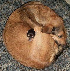 Cuidando su bebe cachorro #Awww