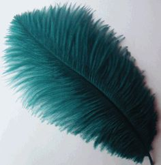 Google Image Result for http://www.smileyme.com/feathers/wholesale_craft_feathers/ostrich_feathers/drabs/feather_plumes_ostrich_drabs_teal.gif