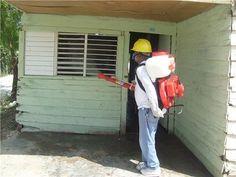 Realizan jornada de fumigación en Nigua por virus Chikungunya   NOTICIAS AL TIEMPO