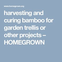 harvesting and curing bamboo for garden trellis or other projects – HOMEGROWN