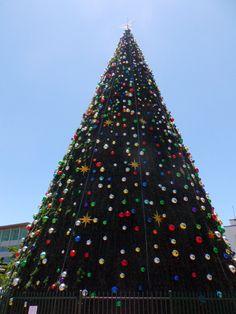 Biggest Christmas Tree in New Zealand, Hamilton