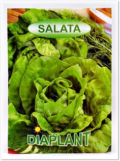 Seminte salata DIAPLANT.