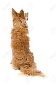 Résultats de recherche d'images pour «back dog»