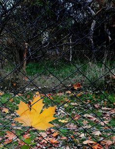 Jesienny liść.
