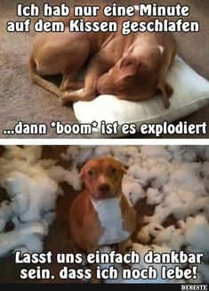 Really funny dog memes Animal Humour, Funny Animal Jokes, Crazy Funny Memes, Cute Memes, Really Funny Memes, Stupid Funny Memes, Cute Funny Animals, Funny Relatable Memes, Funny Dogs